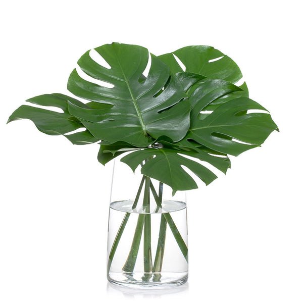 Monstera Leaves, buy this impressive Bill's foliage in 5, 10 or 15 stems.