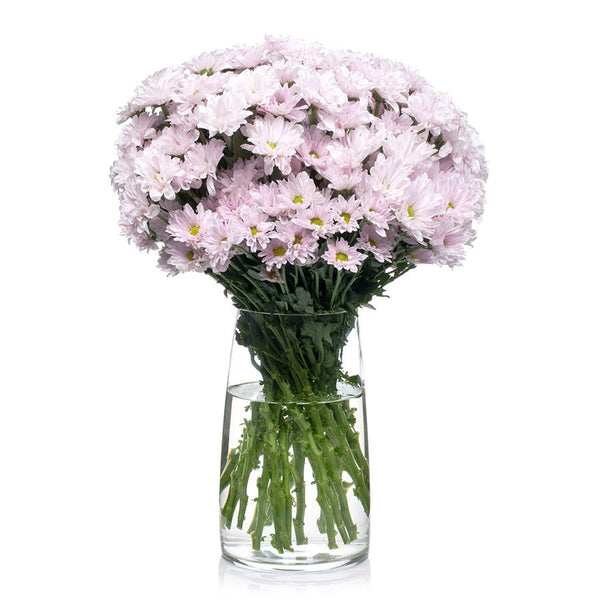 Chrysanthemums, order pretty fresh flowers in pink, white, yellow and red from Bill's today.
