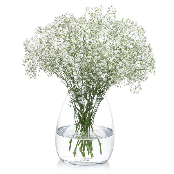 Baby's Breath, a bushy flower great for wedding bouquets. Order yours at Bill's today!