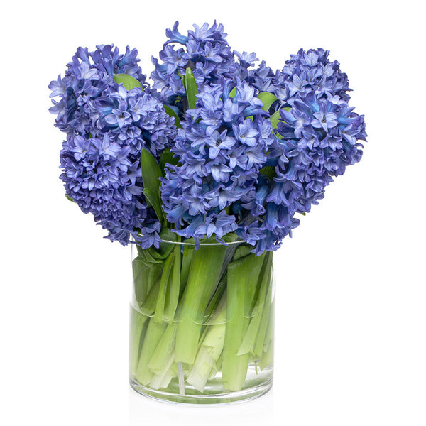 Hyacinths, fill your home with a delightful flower bouquet from Bill's.