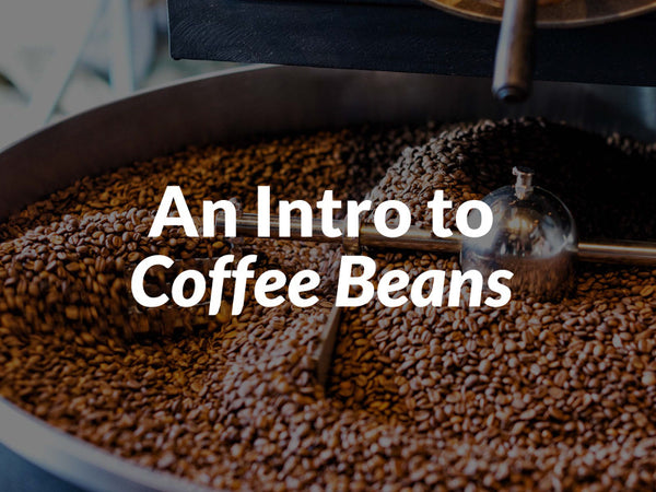An Intro to Coffee Beans