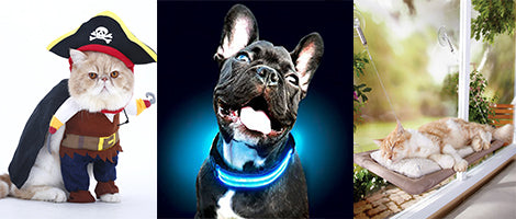 Top Gadgets for your animal friends!