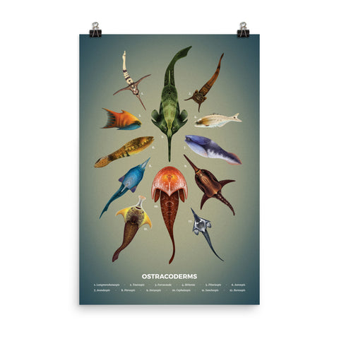 Jawless fishes poster