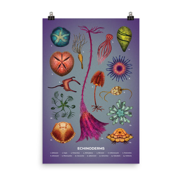 Echinoderms poster
