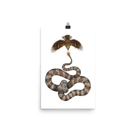 Spider-tailed horned viper poster
