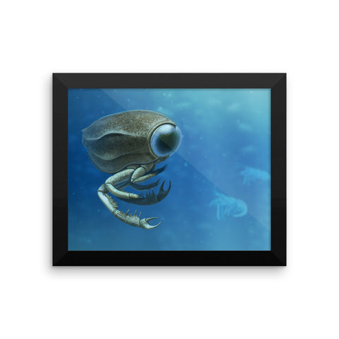 Dollocaris framed print