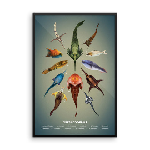 Jawless fishes framed print