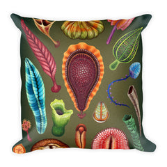 Ediacaran biota pillow