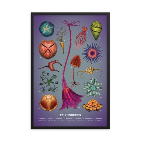 Echinoderms Framed Print