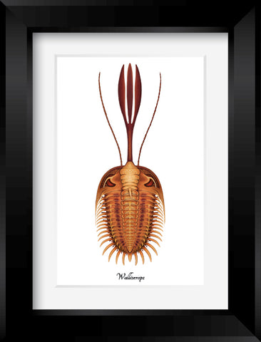 Trilobites framed prints (5x7)