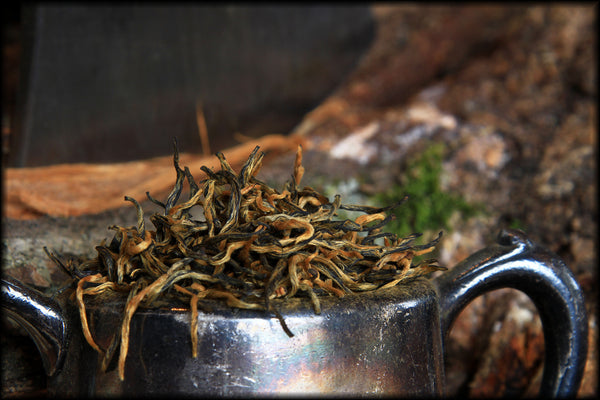 Yunnan Gold Tips - Spring 2016