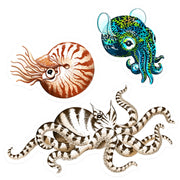 Cephalopod Sticker Pack
