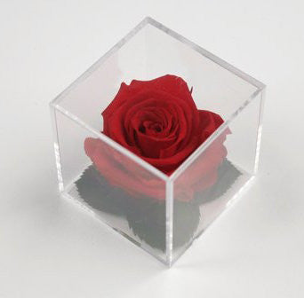 Rose in Cube - Red