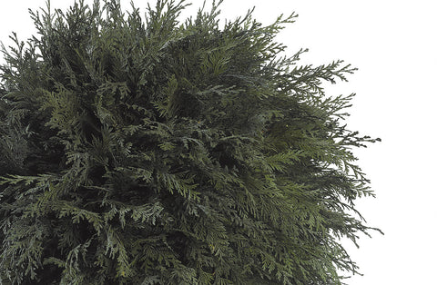Thuja Ball Topiary - Green