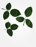 Rose Leaves - Green
