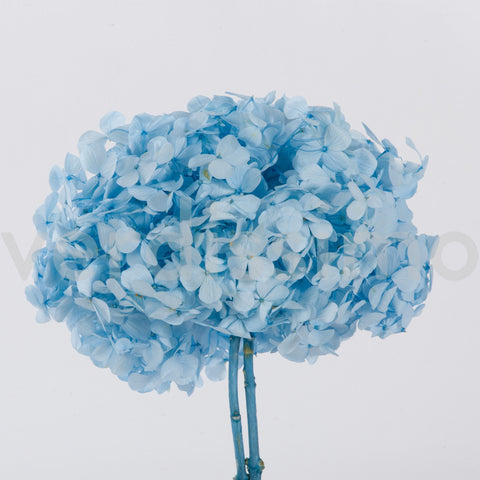 Hydrangea - Light Blue