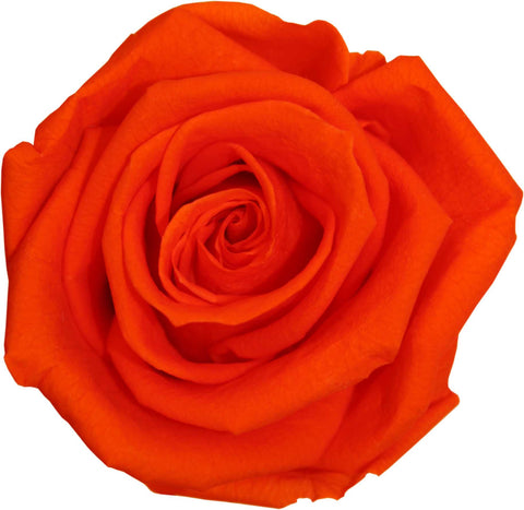 Rose Heads - Orange