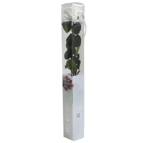 Standard Rose with Stem - White