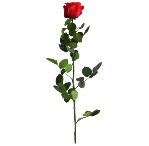 Standard Rose with Stem - Red