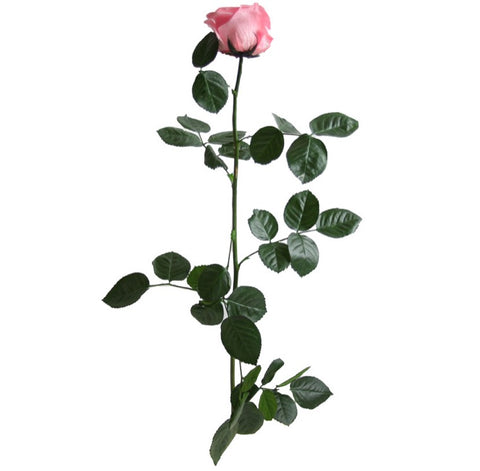 Standard Rose with Stem - Light Pink