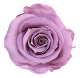 Standard Rose with Stem - Lavender