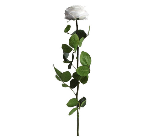 Premium Rose with Stem - White