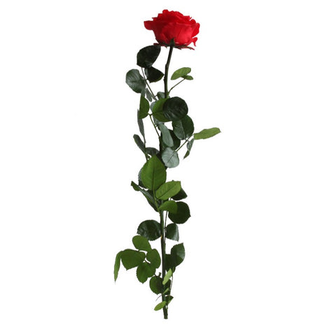 Premium Rose with Stem - Red