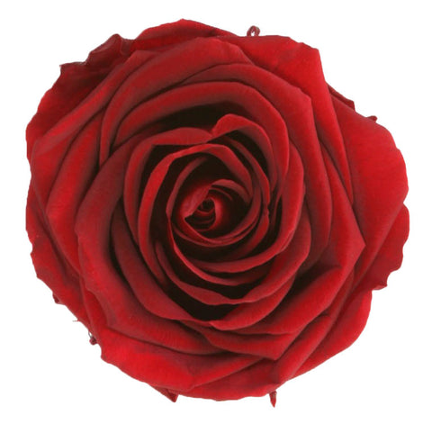 Standard Rose Heads - Burgundy