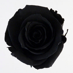 Rose Heads - Black