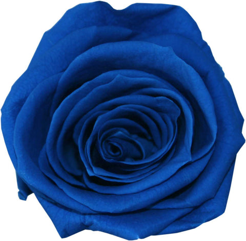 Rose Heads - Royal Blue