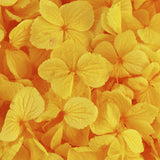 Hydrangea - Golden Yellow