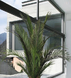 Phoenix Palm Fronds - Green