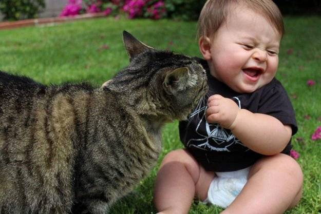 Why Cats are Purrfect Pets for Kids