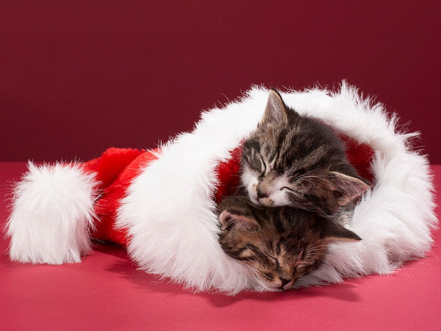 5 purrfect christmas gift ideas for cat lovers