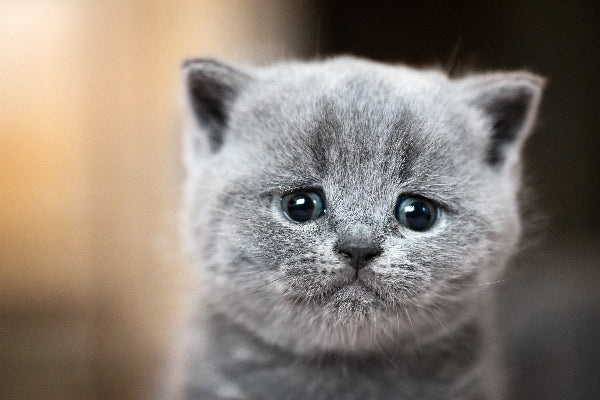 Why do cats cry? Are they sad?