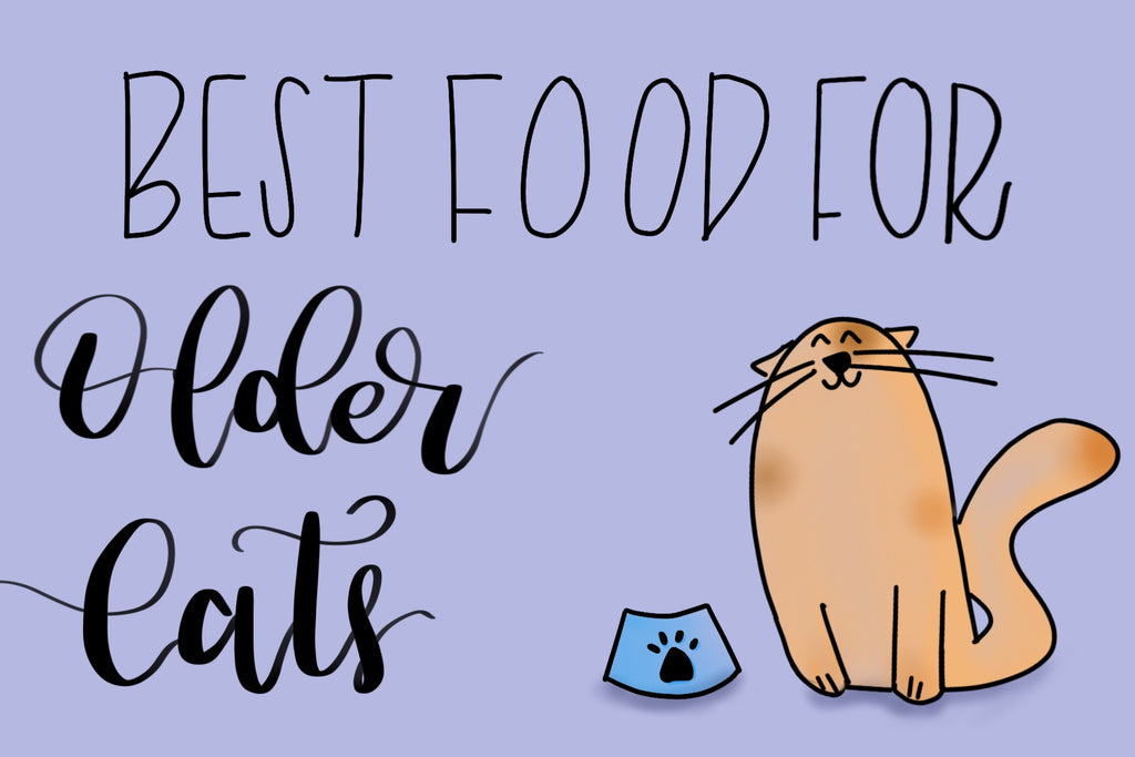 What Are the Best Foods for Older Cats?