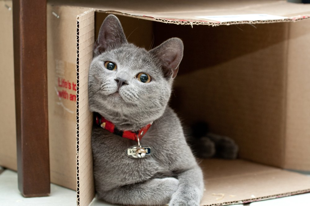 Why Do Cats Like Boxes so Much?