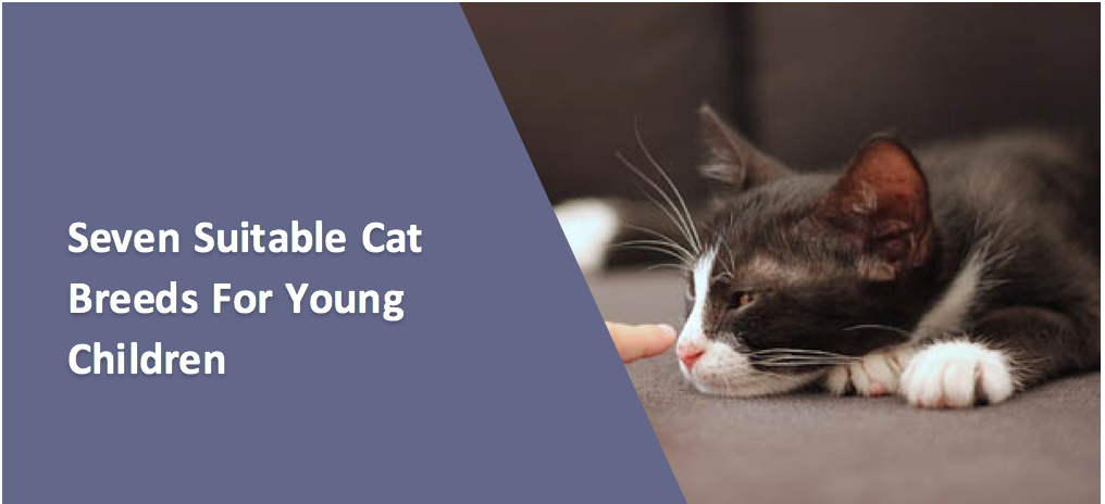Seven Suitable Cat Breeds For Young Children