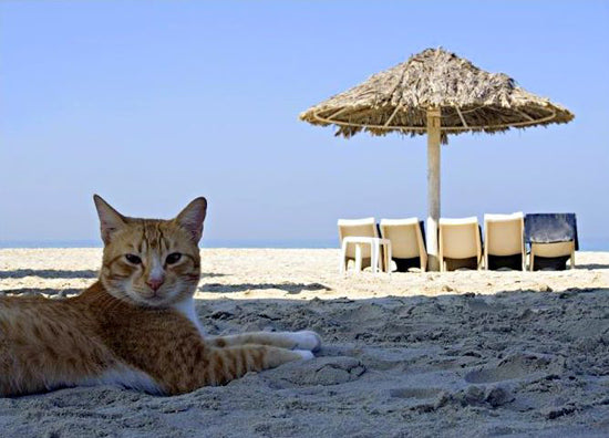 Purr-fect Holiday: Top 5 Vacations for you and your cat
