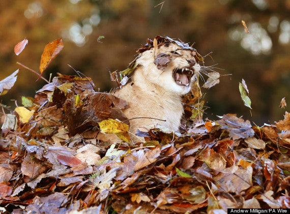 3 Things to do with your cat this fall