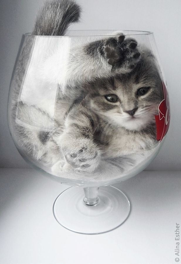 Are cats liquid? We'll dive into the magic cuteness here