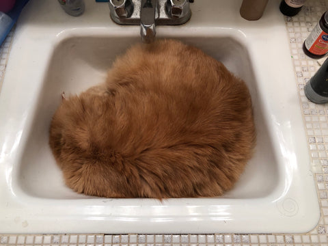 kitten-in-sink