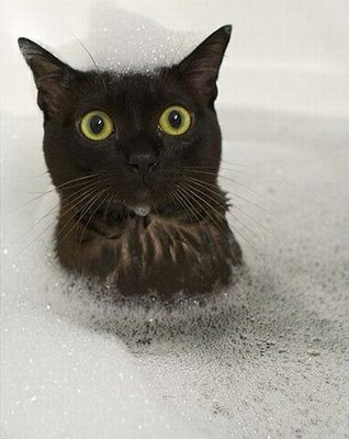 shocked-cat-in-bath