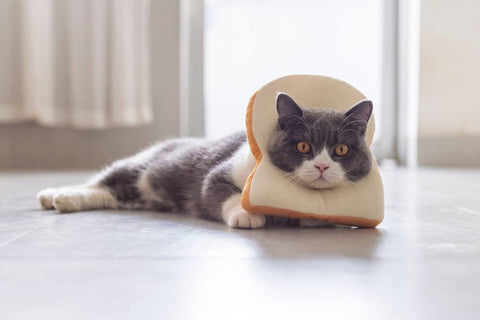 cat with bread hat