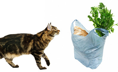 why do cats lick plastic bags