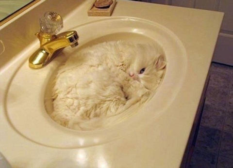 cat-in-a-sink