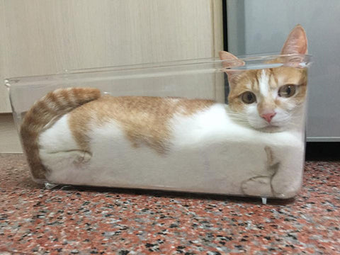 cat-in-boxed-glass