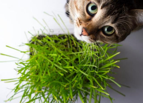 cats and plant