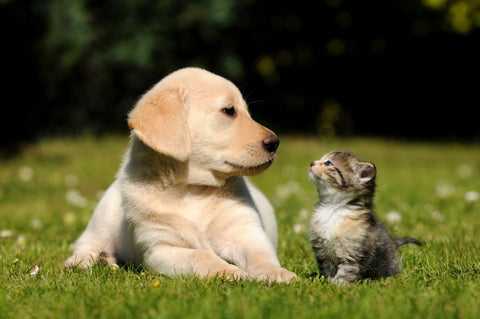 cat and dog staring at each other