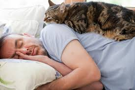 cat sleeping with human on couch